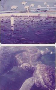 turtles 001