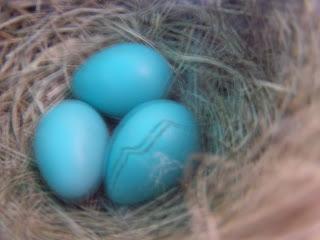 eggs P4062099